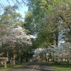 The Lexington Cemetery this morning